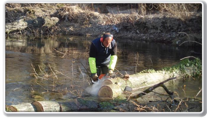 Boisseron, abattage des arbres penchant dangereusement vers le Vidourle en aval du seuil (après)