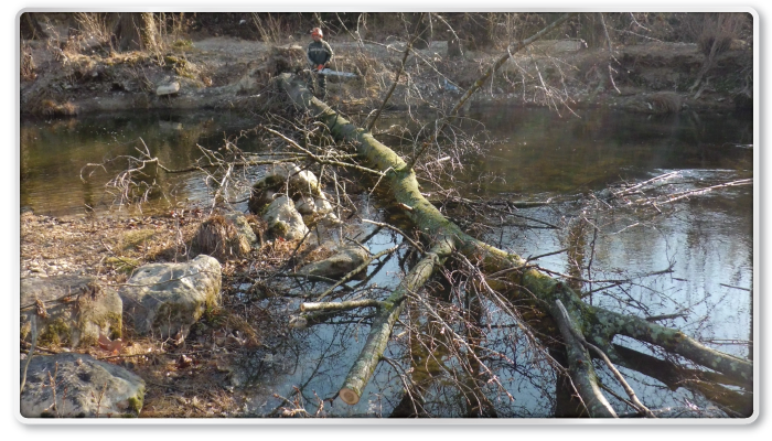 Boisseron, abattage des arbres penchant dangereusement vers le Vidourle en aval du seuil (avant)