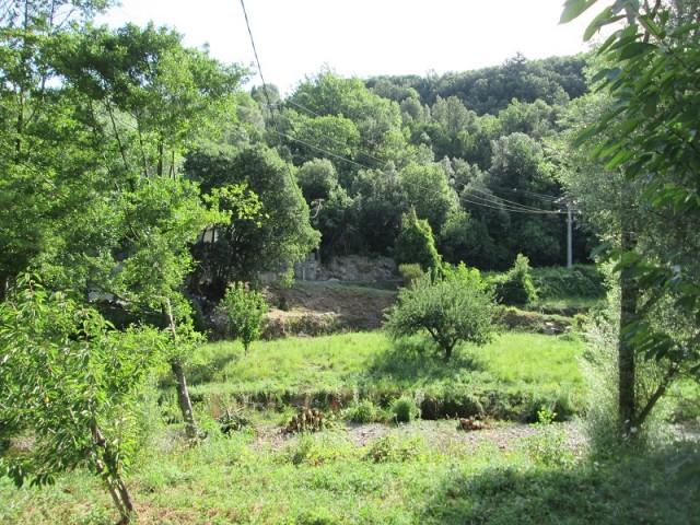 Cros - abattage arbres APRES2