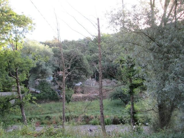 Cros - abattage arbres AVANT2