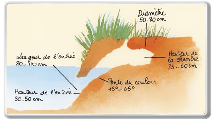 Natura2000_Castor-shema-terrier_700x400px copie