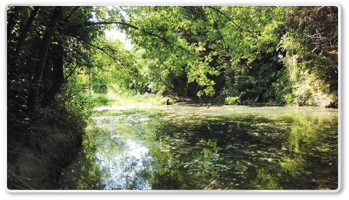 Natura2000_foretSalixAlbaPopulusAlba_700x400px