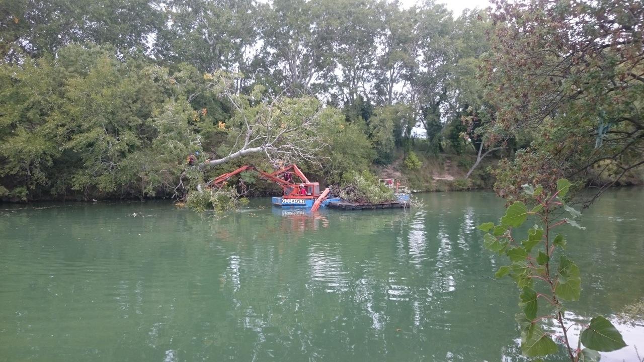 Les travaux de retrait des embâcles et d'abattage des arbres dangereux sur la basse vallée du Vidourle sont en cours